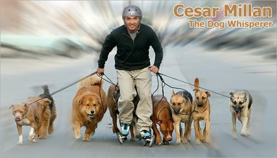 Cesar Millan Dog Training Books
